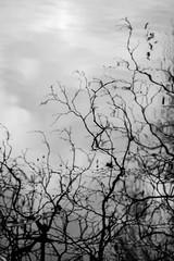 WirrWarr (Manuel Eumann) Tags: nikon norddeutschland manueleumann schleswigholstein kiel d610 nature natur