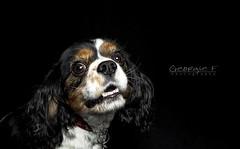 Casey (gardengeorgie) Tags: dog casey february 2014