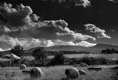 Dramatic clouds of Georgia (Akshana's Photos) Tags: landscape blackandwhite georgia photo clouds morning nikon lightroom