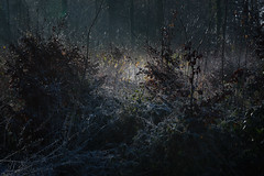 this morning in the woods (glasseyes view) Tags: glasseyesview winter wintermorning forest woods mood foggy mist lightandshadow dramatic sunlight