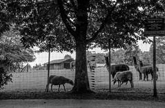 ND7_2311.jpg (budbrain) Tags: bw zoo foto bad sw tierpark wandern marienberg rundweg hirsche budbrain badmarienberg montabauer josefsejrek