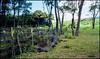 Fence (greenschist) Tags: usa film analog fence hawaii maui kokibeach zeissikonzm kodakektar100 zeissbiogon35mmf20tzm