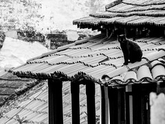 black on the roof (1jonathan1) Tags: morning roof light urban blackandwhite bw sun black animal cat landscape day balcony tiles