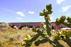 Cacti & flume (chasblount) Tags: statepark cactus newmexico water cacti canon landscape flora desert wideangle flume carlsbad irrigation livingdesert canoneos50d canonefs1018mmf4556isstm canonefs1018mm