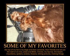 Favorties (Tobyotter) Tags: poster fdsflickrtoys motivator dachshund cameras link