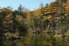 Myojin Pond, Kamikochi (Tokyo Views) Tags: park autumn nature colors leaves japan forest japanese pond conservation autumnleaves autumncolors foliage national nagano kamikochi biodiversity chubusangaku