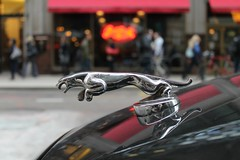 On The Prowl (Flint Foto Factory) Tags: city morning november autumn urban chicago reflection fall sign metal cat emblem illinois am shiny downtown loop thing pizza ornament chrome signage hood rushhour jaguar pizzeria pounce giordanos xj 223 ontheprowl 2015 wjacksonblvd