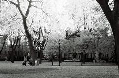 Hamilton Park in Jersey City (aaronvandorn) Tags: park jerseycity infrared ilfordsfx minoltasrt202 rokkor58mmf14 720nmirfilter