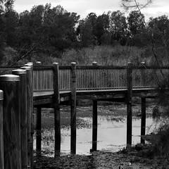 The Wetlands (Aviator195) Tags: wood bridge trees light blackandwhite black tree nature water monochrome rain weather square wooden nikon cloudy overcast australia monochromatic 11 rainy walkway swamp wetlands passage wetland sydeny northernbeaches warriewood d7100 warriewoodwetlands nikond7100