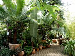 greenhouse (the girl with cold hands) Tags: trees summer plants green leaves garden palms sunny greenhouse