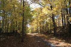 That season again... (SamSpade...) Tags: autumn orange fall leaves yellow oak cottage lakeside birch maples 575 6231 151023