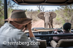 Tourist photographing and African Elephant (Loxodonta) from a truck at Hlane Royal Game Preserve, Swaziland, Africa. (Remsberg Photos) Tags: world africa usa outdoors photographer wildlife tourist majestic charge swaziland africanelephant biggame loxodonta gamereserve mbabane hlanepark