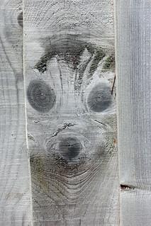 Meerkat Face Fence!
