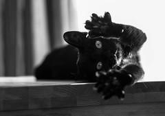 Relaxing in the sun (simonpe86) Tags: black cat sweet katze relaxed schwarz entspannt liegend flickrchallengegroup flickrchallengewinner