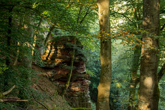 Felsen im Saartal / Rocks in the Saar valley (thunderbird-72) Tags: allemagne autumn deutschland herbst morgen germany automne wald september light morning matin fort forest rock felsen lumire saarland licht morgenlicht mettlach de