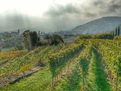 Herbst in der Pfalz (Bibendum41) Tags: herbst gimmeldingen knigsbach weinberge wetter