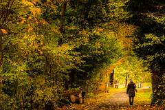 Autumn Leaves (explored) (marco soraperra) Tags: leaves autumn nikon nikkor tree outdoor grass walking orange yellow green verde explore color colorful fallcolors wow