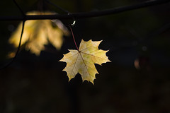 Autumn (rubalanceman) Tags: