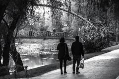 bridge2 (Berkan Byktmbk) Tags: street streetphotography stairs streetphoto streetphotobw fujifilm xt1 bw blackandwhite monochrome bridge tree river walking people human outdoor park