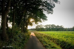 From darkness to he light (Greet N.) Tags: evenig light shadow forest trees fields nature cyclepath september drenthe