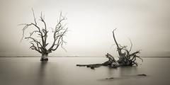 Fallen (David Dahlenburg) Tags: southaustralia sa lake bonny lakebonny dahlenburg trees deadtree deadtrees wwwdaviddahlenburgcom australia landscape longexposure