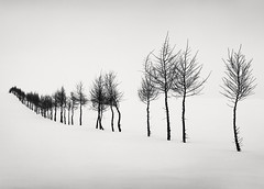 A Dream within a Dream (hiromichiendo) Tags: japan longexposure art bw blackandwhite monochrome landscape nature minimalism fineart silence tranquil still zen abstract nd trees snow