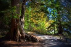 09-11-2016-Secret Places (Valerie Sauve-Vancouver) Tags: catesparknorthvancouverbc trees trail outdoors nature northvancouverbc