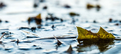 Trapped (Wouter de Bruijn) Tags: fujifilm xt1 fujinonxf90mmf2rlmwr autumn leaf autumnleaves fall ice winter cold macro chilly weather nature outdoor depthoffield bokeh
