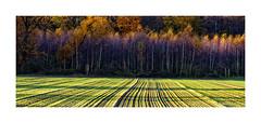 ACKERBAU  linientreu (Babaou) Tags: deutschland nrw niederrhein kreiskleve kevelaer landwirtschaft rural agriculture acker ackerbau dxo