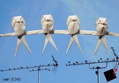 #origamimigration (-sebl-) Tags: origami migration swallows bird sebl john gerard paper base