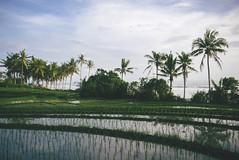P1040648-Edit (F A C E B O O K . C O M / S O L E P H O T O) Tags: bali ubud tabanan villakeong warung indonesia jimbaran friendcation
