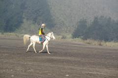 Java (O!i aus F) Tags: ndonesien java brom asien osm k5 nationalpark bromo tengger vulkan krater