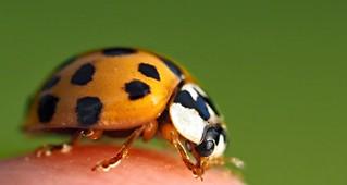 monsterbug (explored)