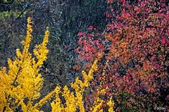 A travs del cristal (Franco DAlbao) Tags: francodalbao dalbao fuji otoo autumn bosque wood parque park colores colours ventana window vigo rboles trees