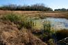 Baker Wetlands Scene.  Grasses with water. (drbensonjr) Tags: nature bakerwetlands