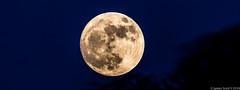 20161113 70D Super Moon 7 (James Scott S) Tags: palmbeach florida unitedstates us super moon full telephoto canon 70d outdoors lrcc sigma