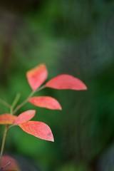 DSC07014 (@saka) Tags: autoupload leaves 481490 flowers 42004204