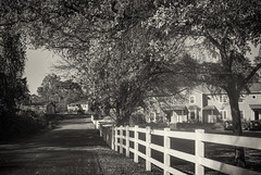 back_country_road (gerhil) Tags: road fence leadinglines monochrome blackwhite country scenic serene outdoor rural tree autumn november2016 niksilverefexpro2 landscape travel location quaint nostalgic