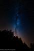 Spruce Tips & Milky Way (rishaisomphotography) Tags: kodiak alaska milkyway astrophotography landscapephotography nightphotography nature naturephotographer stars trees spruce