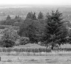 6x12 TMAX 400 i1 (Zane's Photography) Tags: oregon valley newburg tmax400 kodak horseman45fa 6x12 schneider210mmgclaronf9
