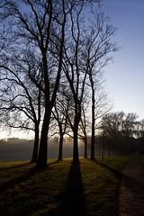 Le roi soleil (Gerard Hermand) Tags: 1612055609 gerardhermand france paris canon eos5dmarkii formatportrait parc park versailles arbre tree chemin path soleil sun contrejour backlight silhouette ciel sky