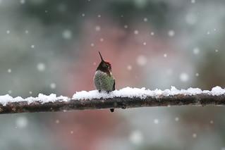 snow day-0682