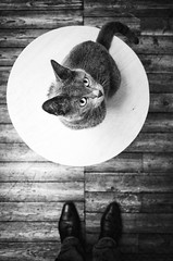 One cat on a coffee table... & two feet !! (Vanvan_fr) Tags: noiretblanc bw nb blackandwhite chat cat animaldecompagnie tablebasse coffeetable parquet vueenplonge birdseyeview shoes chaussures pieds feet look expression regard animalplanet france photo gr