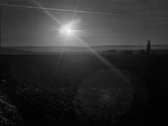 Gegenlicht (salparadise666) Tags: voigtlnderbergheil9x12heliar135f4 5fomapan10080asasheetfilmcaffenolrs14min nils volkmer vintage camera germany large format monochrome bw calenberger land niedersachsen region hannover gegenlicht voigtlnder bergheil 9x12 heliar 135mm 4 5