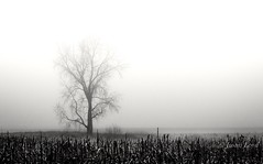 Against the Fog (Justin Loyd Photography) Tags: simple fog fields tree iowa perry canon photography camera thursday gray dreary misty stalks midwest gloomy 70d eos 70200 f4 rural blackwhite monochrome bw simplify winter january cold solitude corn harvested nature explore smooth fade subtle minimalist