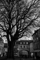 Abbey Green, Bath, UK (JoshuaSYChang) Tags: black white trees bath england uk contrast city travel nikon d7000 wide outdoor