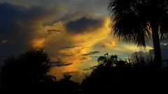 Summer Storm at Sunset (Jim Mullhaupt) Tags: pink blue sunset shadow red wallpaper sky orange sun storm color tree rain weather silhouette yellow clouds landscape gold evening nikon flickr sundown wind florida dusk palm exotic p900 tropical coolpix thunder bradenton endofday mullhaupt cloudsstormssunsetssunrises jimmullhaupt