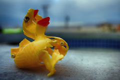 The Diabolical Death of a Duck (hbmike2000) Tags: sky broken pool yellow toy outside duck saturated nikon plastic hdr outoforder chewed odc knarled d810 hbmike2000 plasticrubberduck