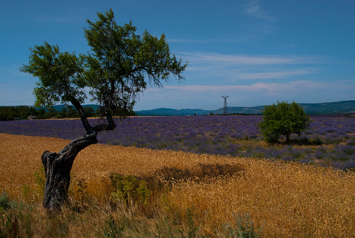 Provence_09_626