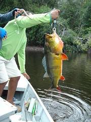 Amazonia 2012 (18)